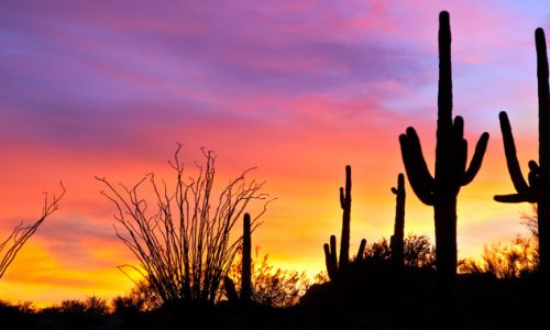 Reasons to Buy a Home in Arizona near the Holidays